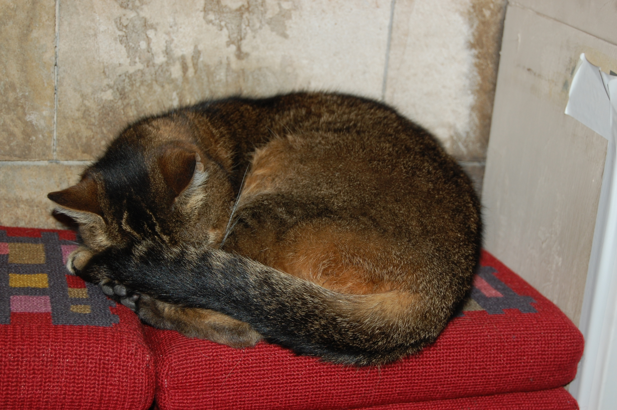 Doorkins Magnificat, the Southwark Cathedral cat.