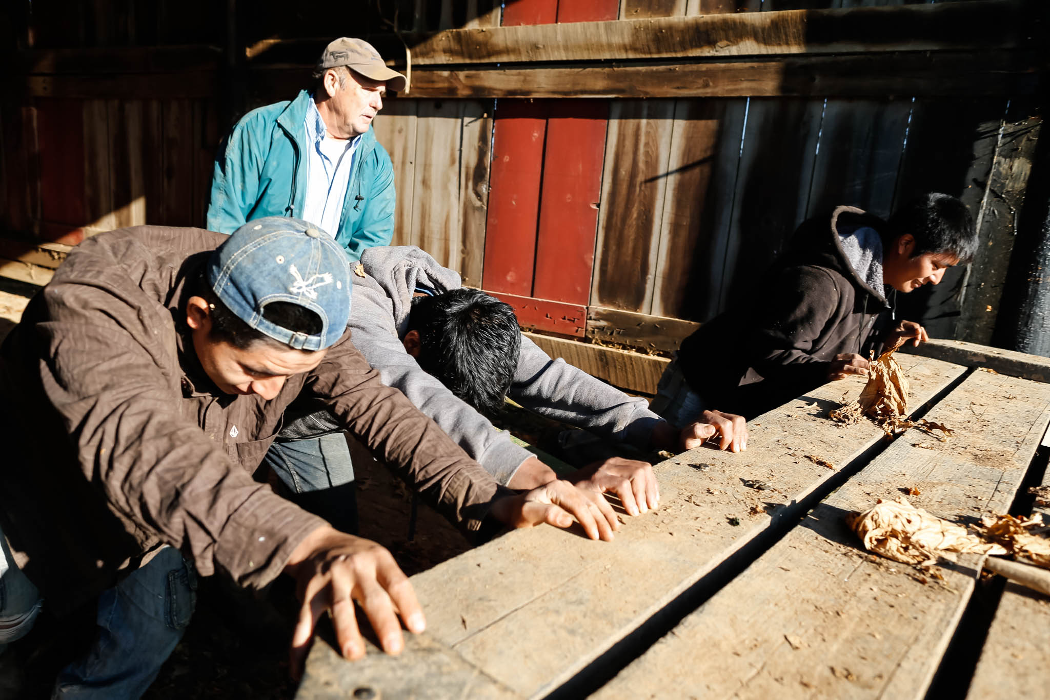 Mucci and the migrant workers remove wagons from the barn to make room for tobacco.