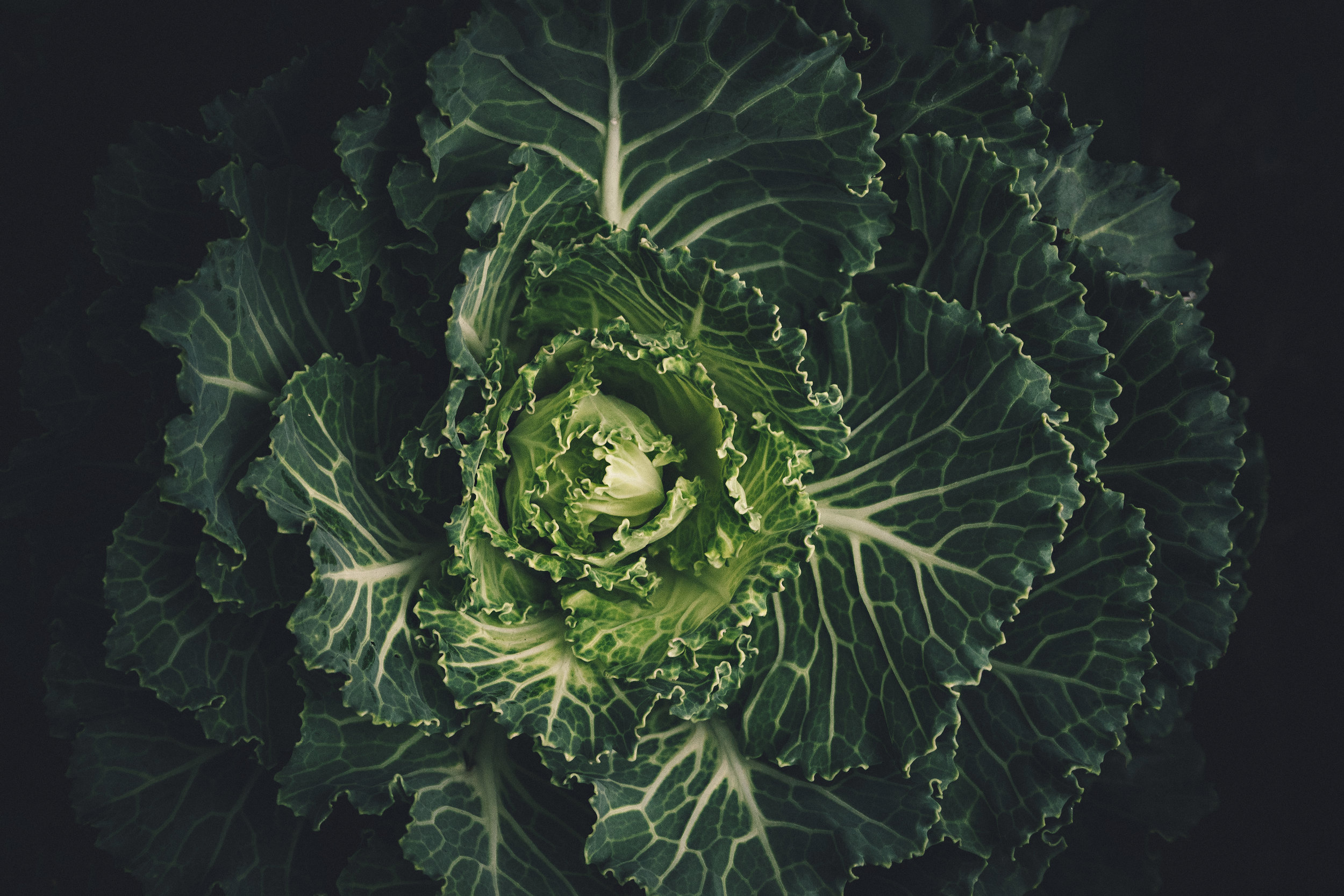 RULE 1/ - Eat plenty of fresh vegetables and fruit. Particularly leafy green veg that gives micronutrients (vitamins, minerals) to enable the body to yield energy faster.