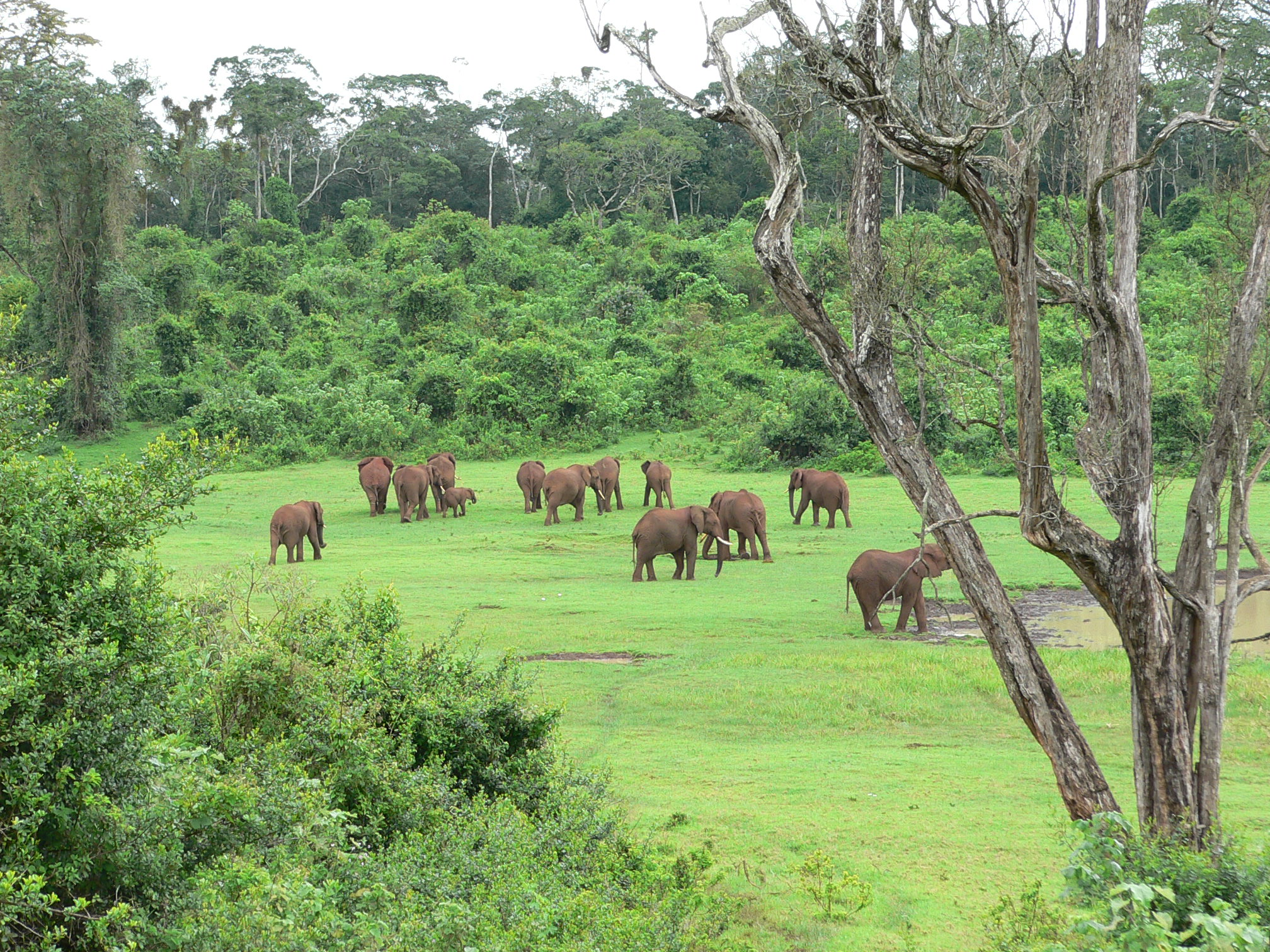 Elephants protected by the Aberdare fence