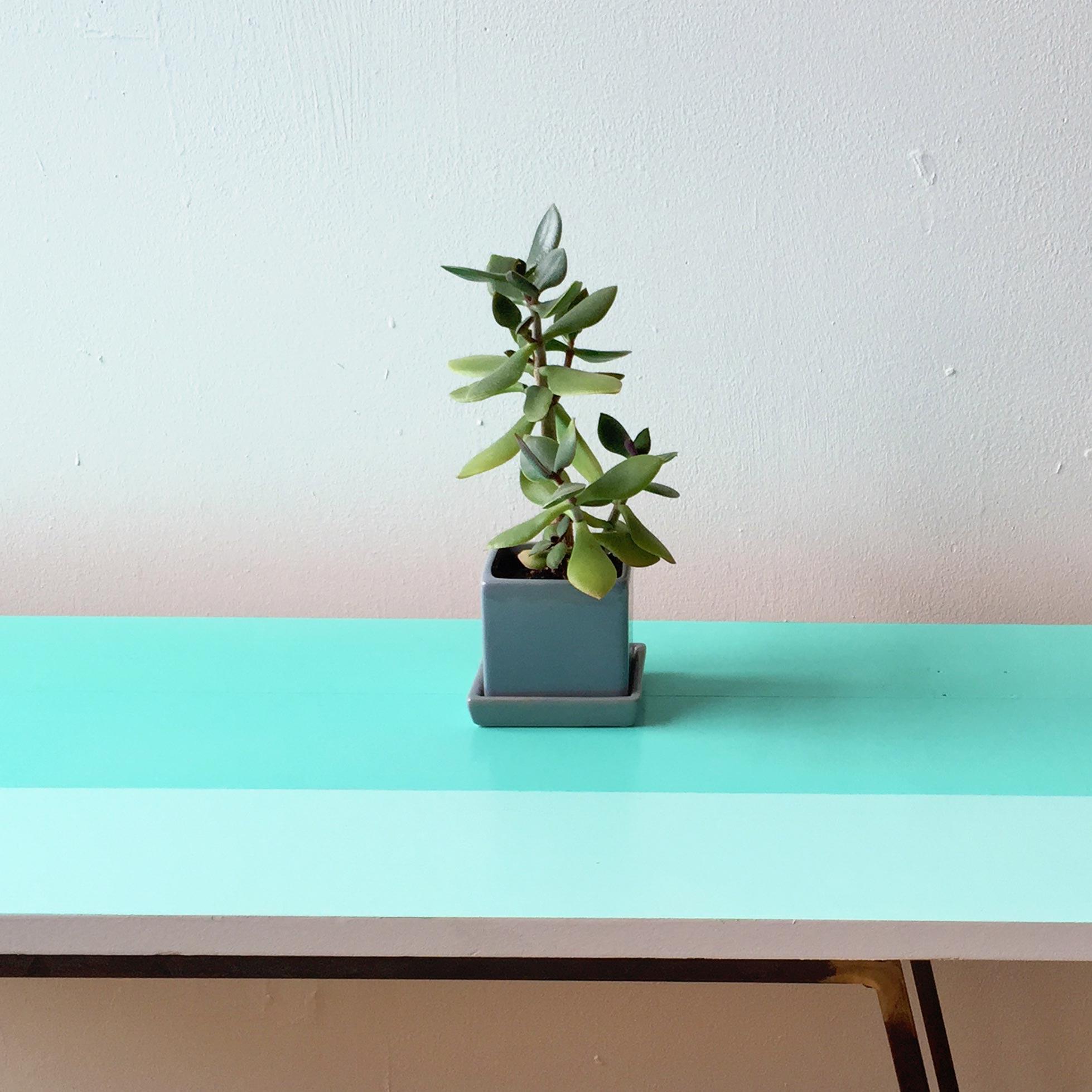 Table1_IMG_1365_plant.jpg
