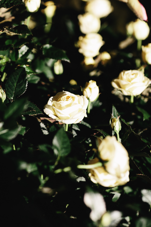 161602_FLORERA_MALMO_06