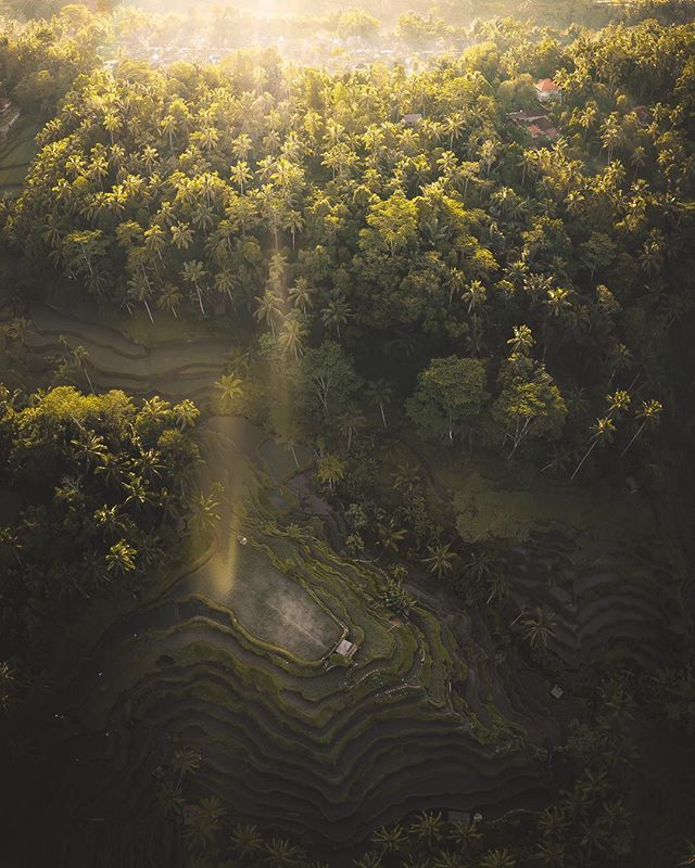 ☀️ Welcome to Tegalalang… • My last day in Bali was probably the finest. At the world famous Tegalalang Rice Terraces in Ubud, I witnessed a spectacular sunrise. With my @djiglobal Mavic 2 Pro, I saw it from a vantage point I found hard to fathom. It was just a sight beyond description, and an unbelievable way to end an unforgettable trip. ….. @BeautifulDestinations #DiscoverEarth