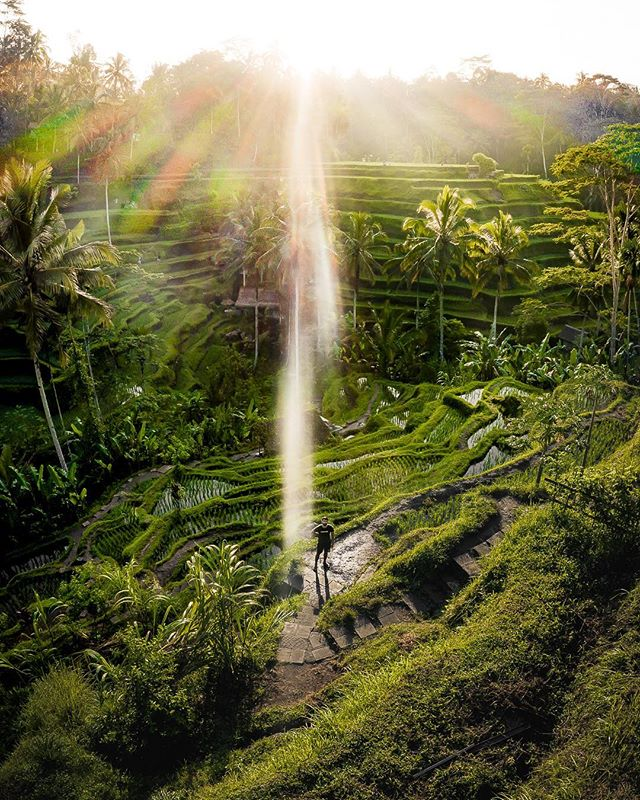 Self-Portrait: Tegalalang Rice Terraces, 7:23 AM, Bali • Thank god for drones! Traveling Bali alone was one incredible experience, and trying to take a photo of myself was real difficult. Either I set up a tripod and hope it doesn't interfere with anyone (or fall over for that matter), but then I'd have to run in flip flops. Flying my drone was definitely a better option. What a morning.