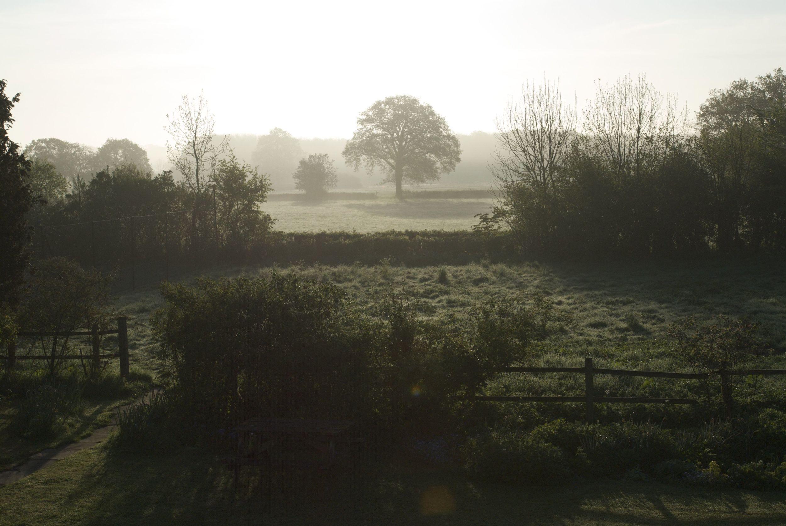 Oak tree in mist - Hampshire