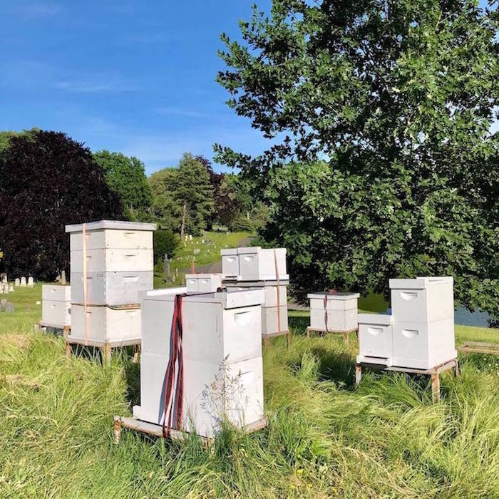 cemetery hives