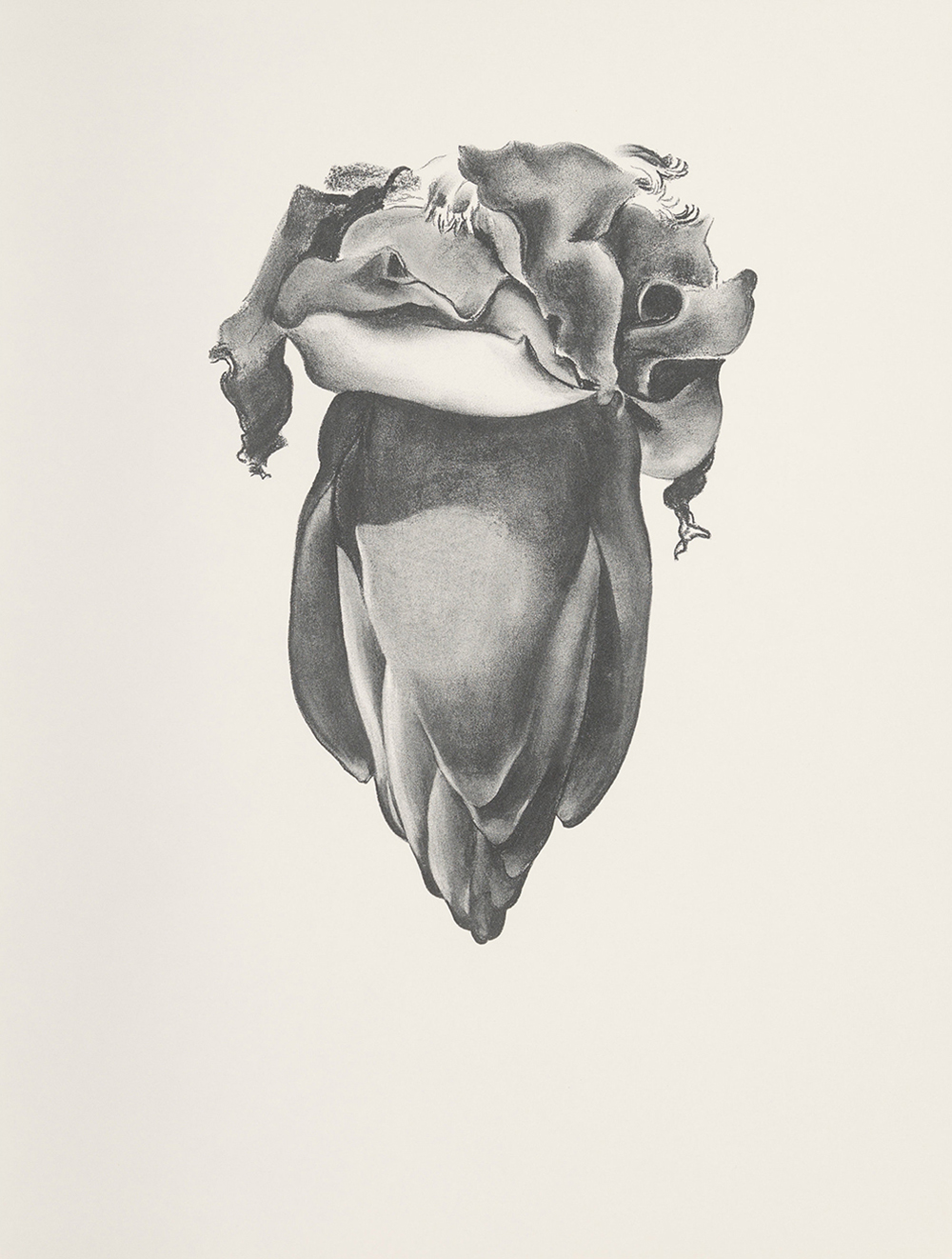 Banana Flower, 1933,   Lithograph on Rives BFK paper, 1968, 25 x 19 inches