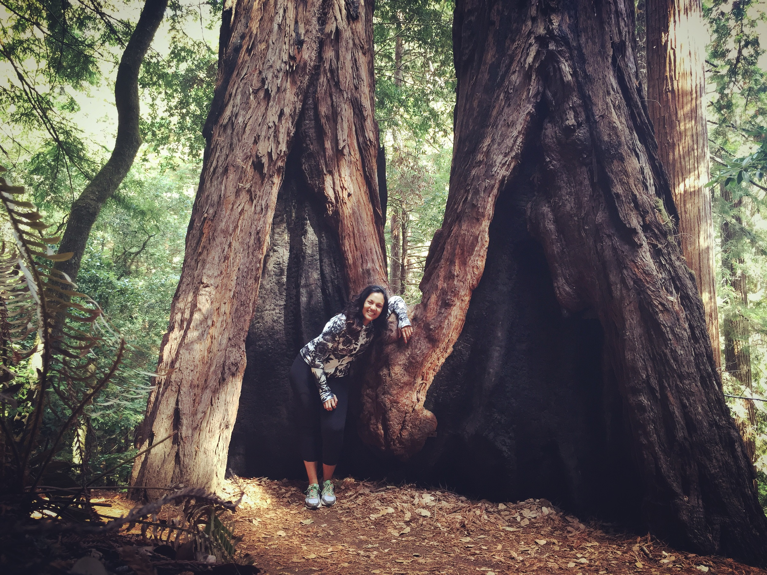 Hiking in Muir Woods outside of Mill Valley, California