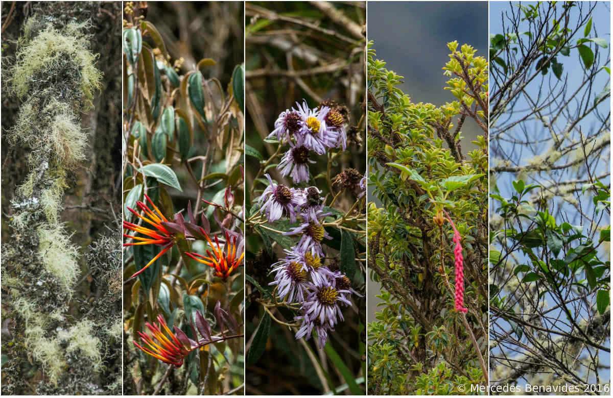 Muestras de flora en el camino / Sample flora along the route