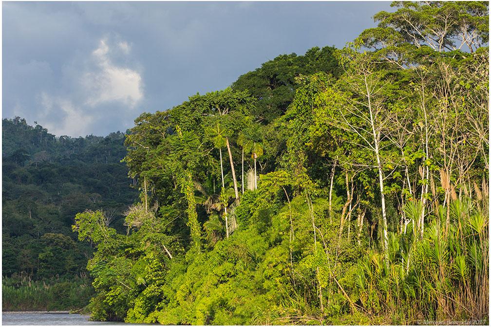Atardecer en el rio, rumbo al Puerto Atalaya. /  Sunset on the river, sailing toward the Atalaya Port.   Parque Nacional del Manu. /  Manu National Park.  Cusco + Madre de Dios. PERU