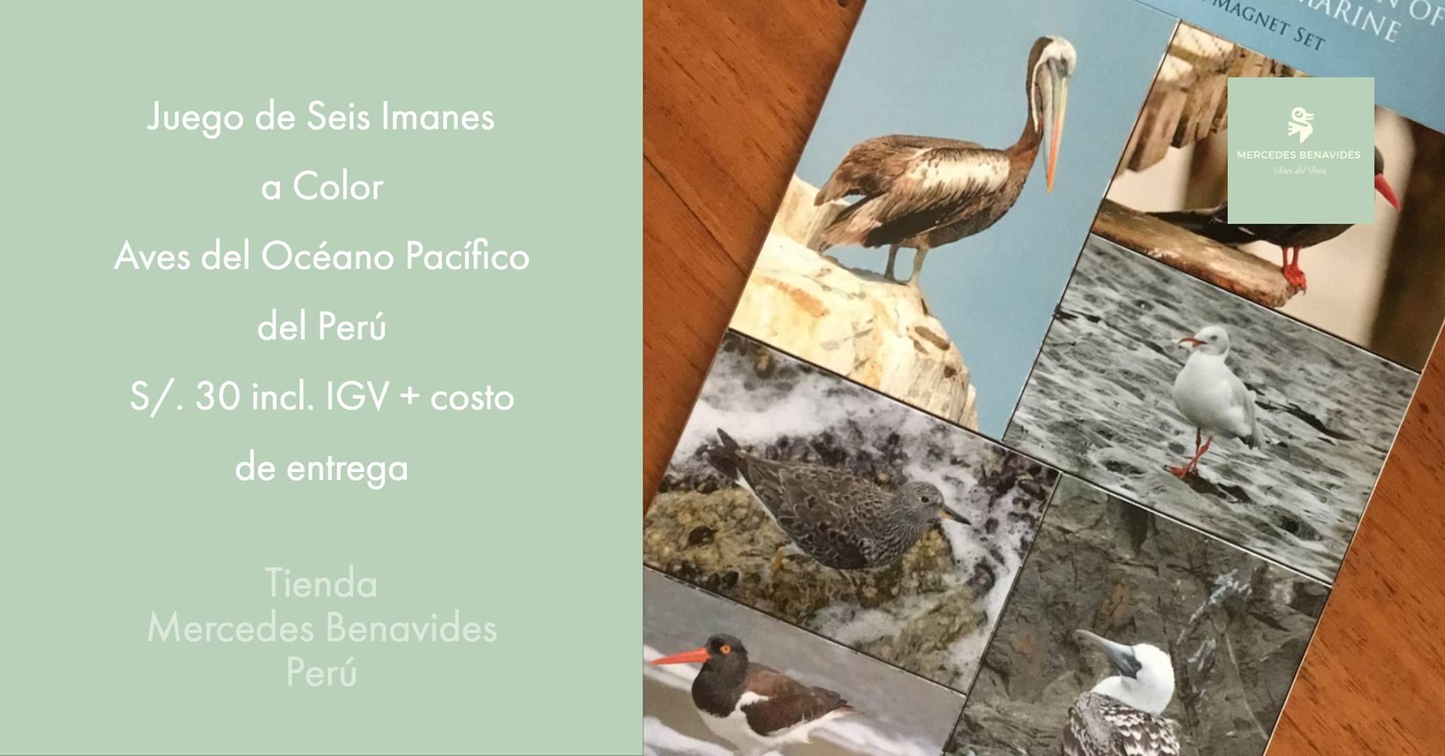 Juego de Seis Imanes con Imágenes de Aves del Océano Pacífico del Perú   Información en el verso sobre los nombres de las aves, su estado de conservación y hábitat. Incluye acciones de conservación posibles.  21 cms x 13 cms x 0.5 cms  Cantidad limitada
