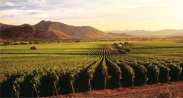wine country critic expert station event companies