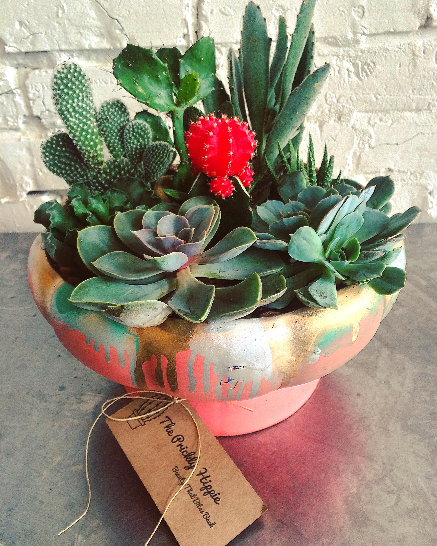 Cacti Succulent Care The Prickly Hippie