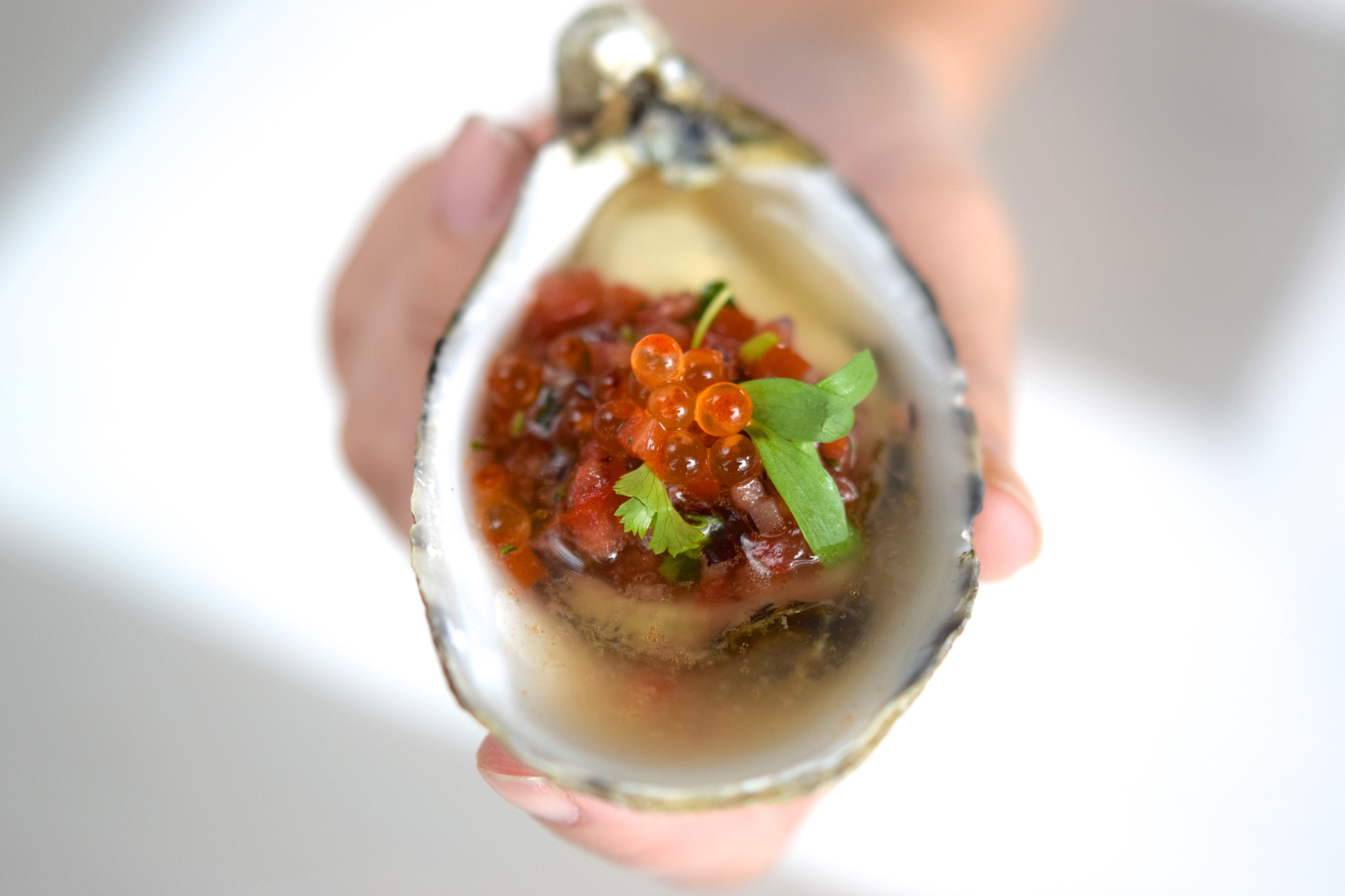Roe + Oyster