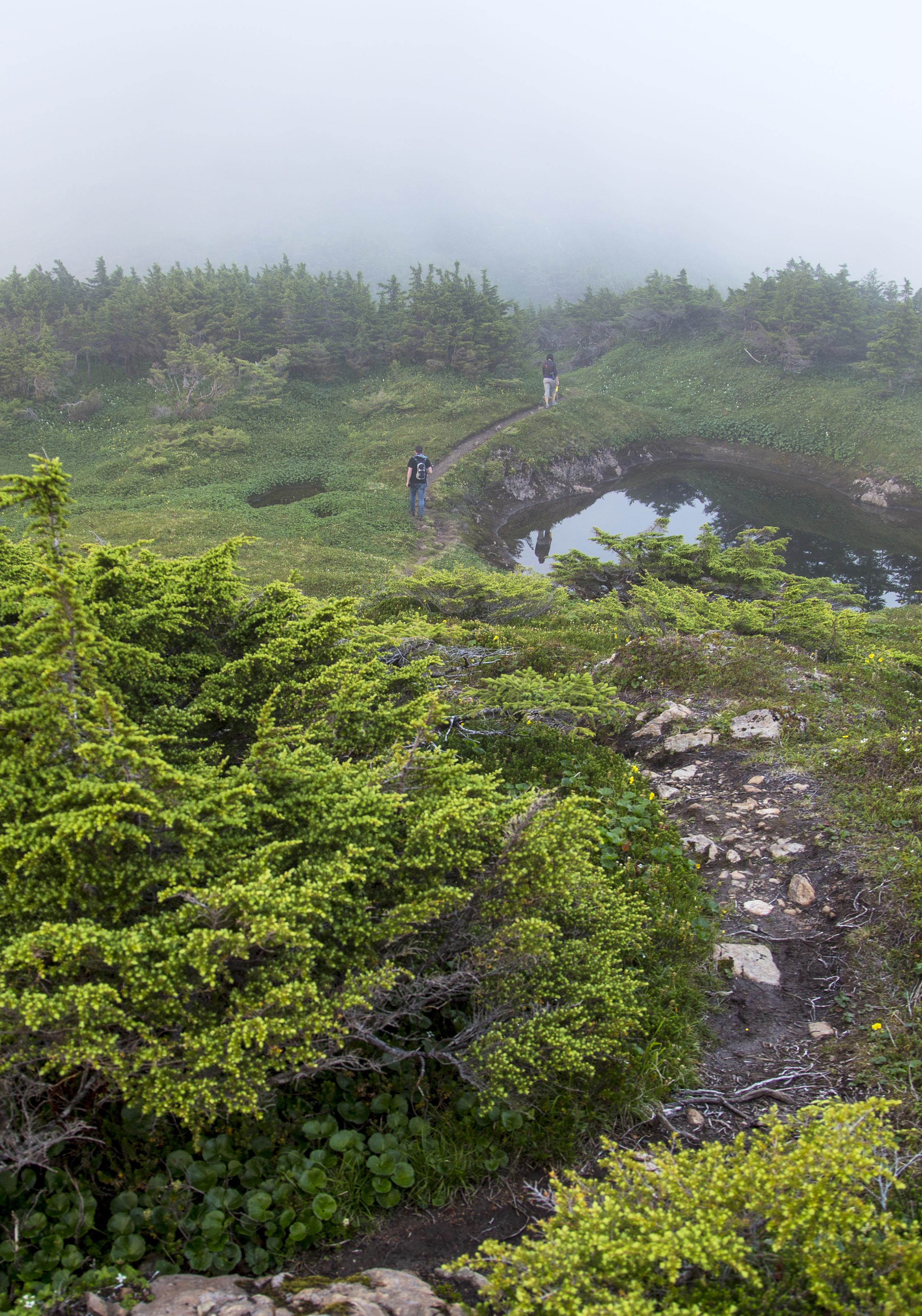 Hiking Eyak Peak in the fog