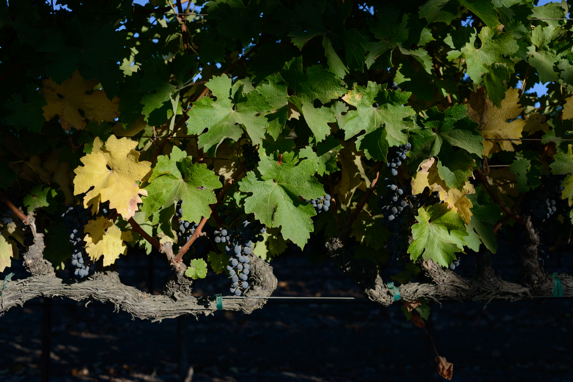 Vinescapes_11.jpg