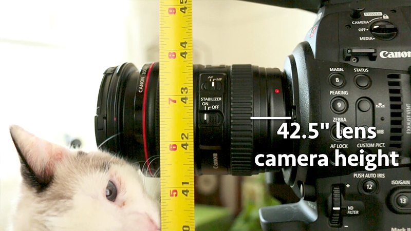 Measure from the ground to the center of the lens to record camera lens height. This way, even if a different camera or tripod was used, you can recreate the same lens height.