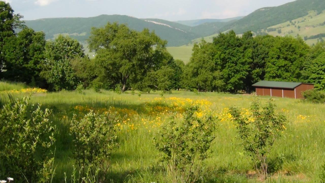 Summer Views over Flower Meadows