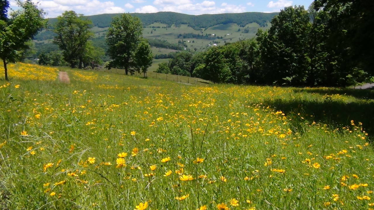 Flower Meadows Below House