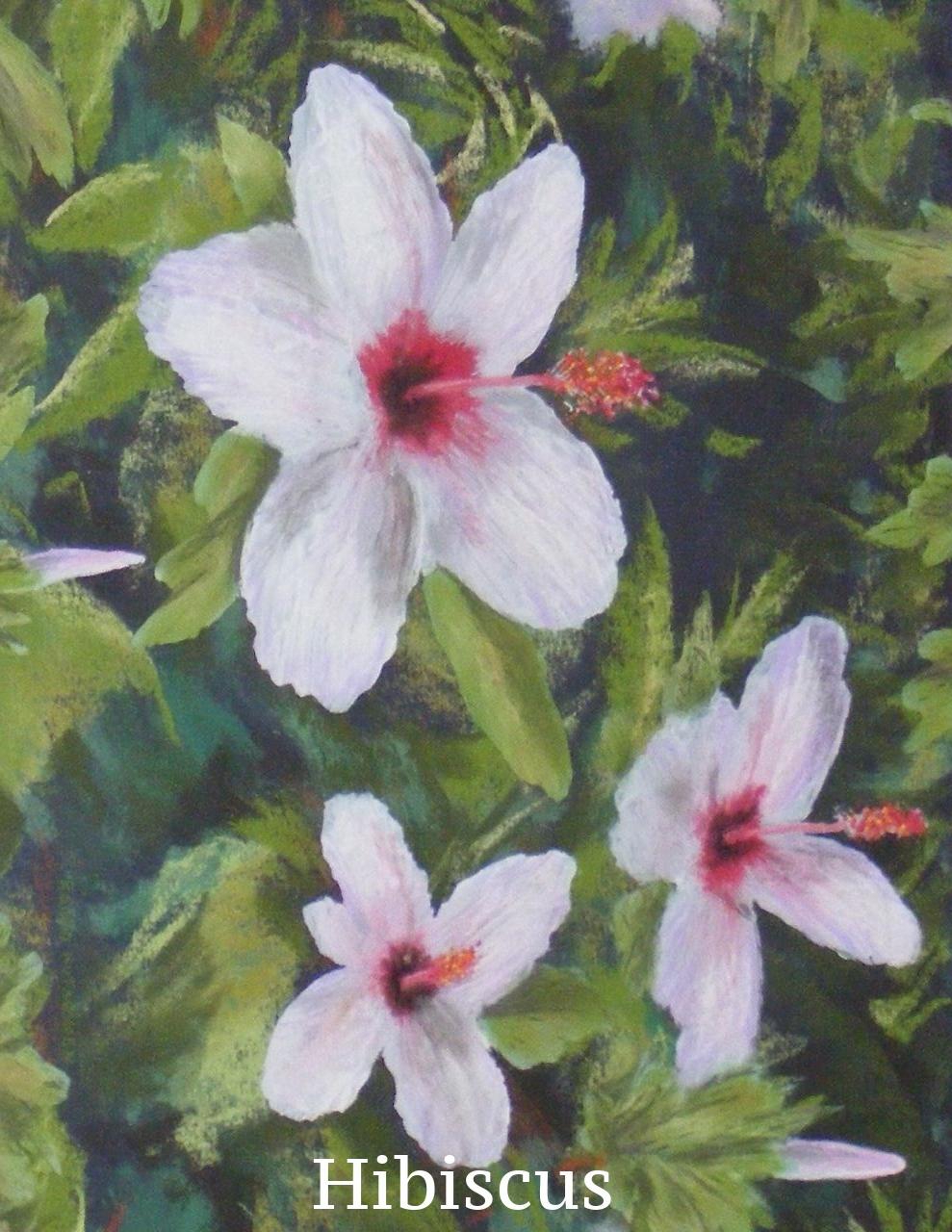 DSCF1597 Hibiscus.jpg