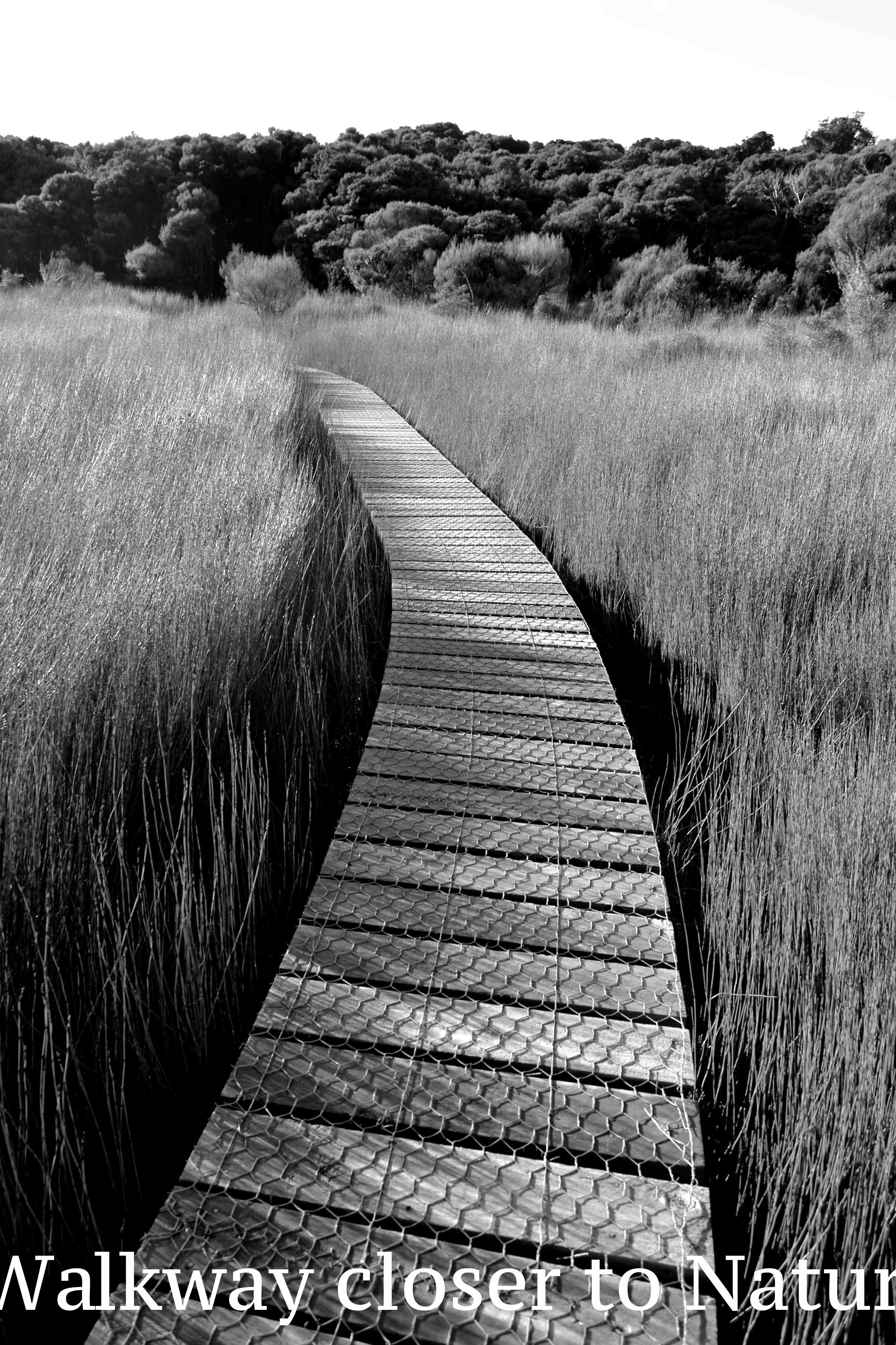 Walkway closer to nature