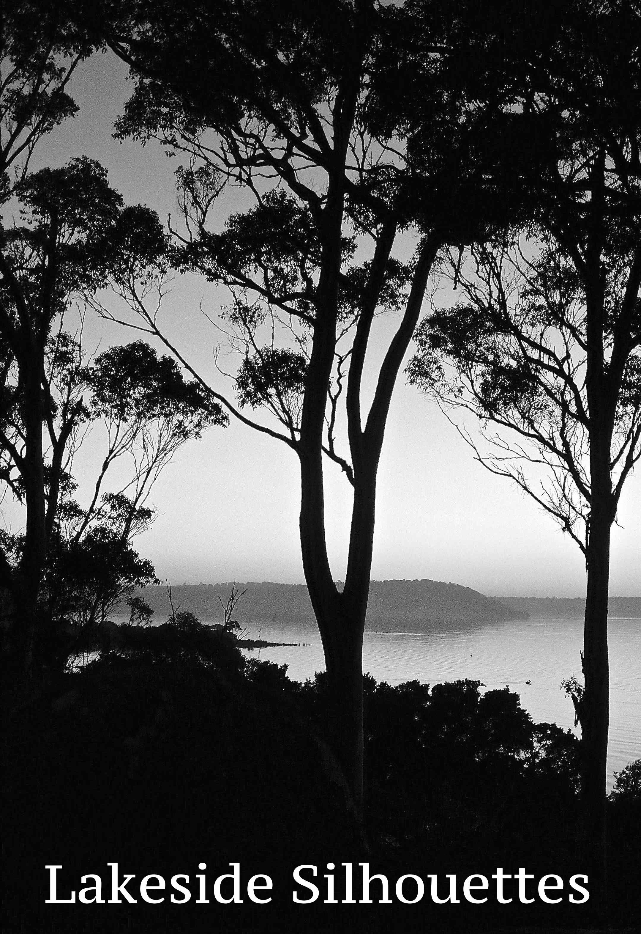 Lakeside silhouettes