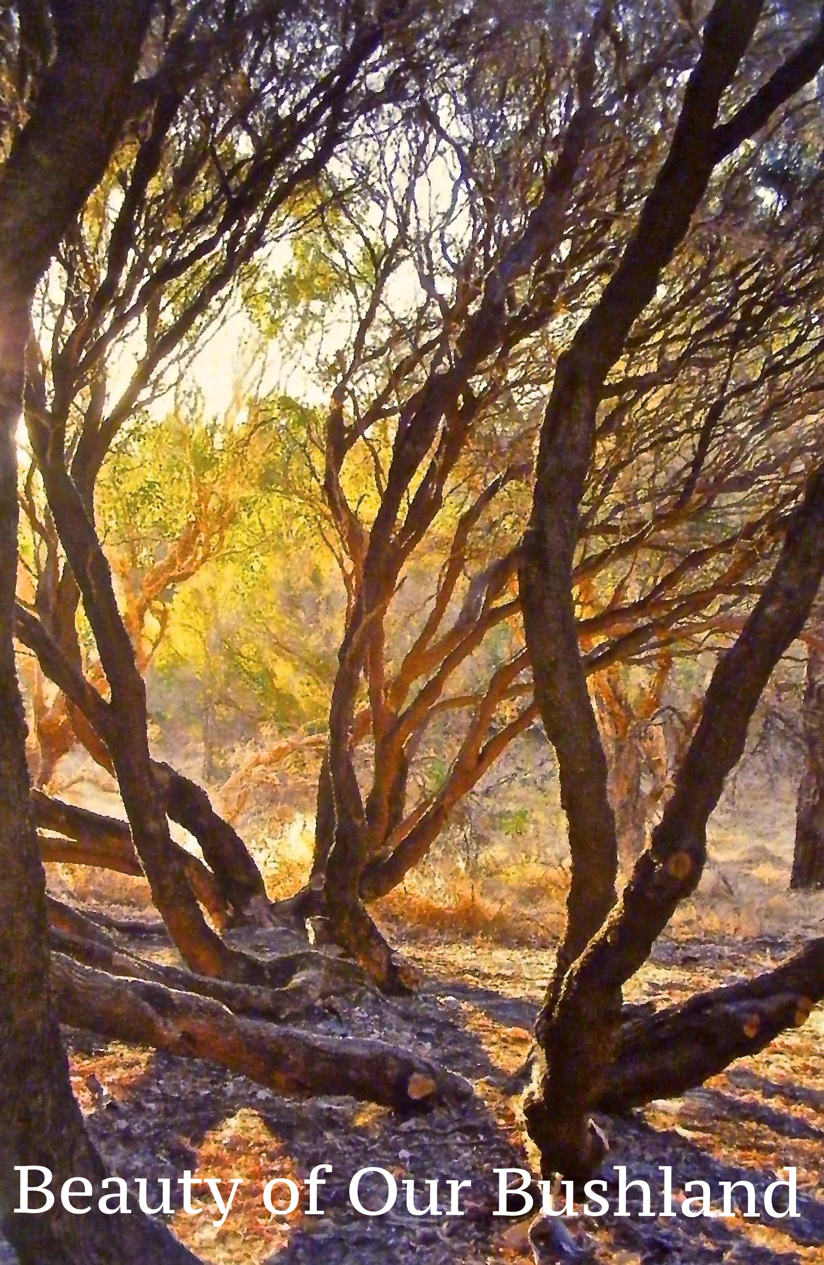 Beauty of our bushland