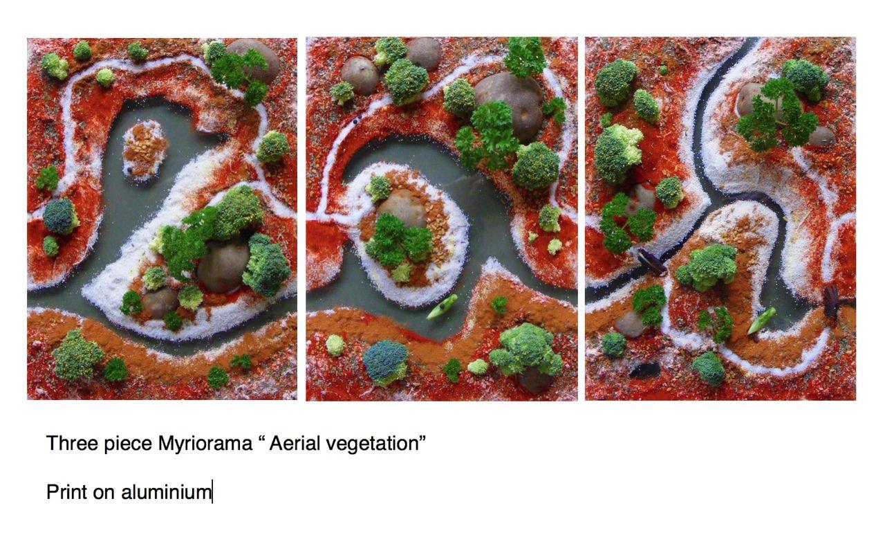 Aerial Vegetation.jpg