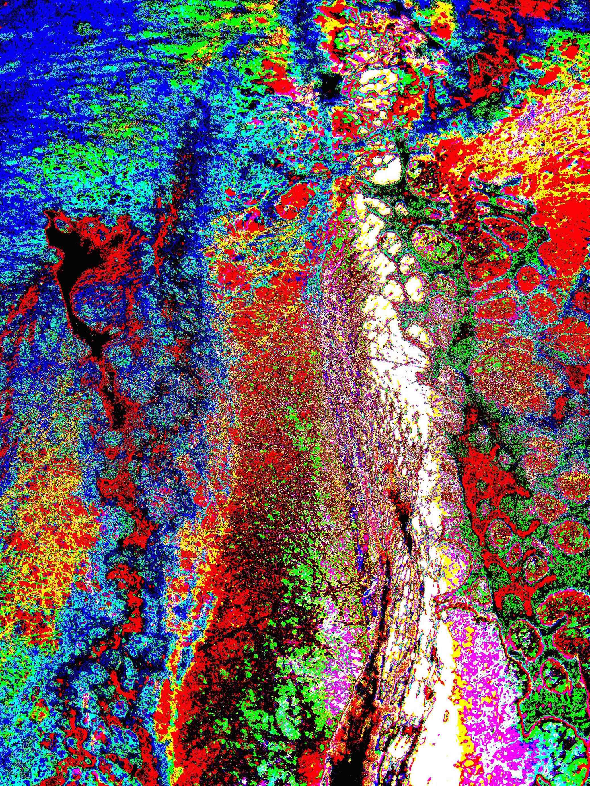 Cascade of Colour.jpg