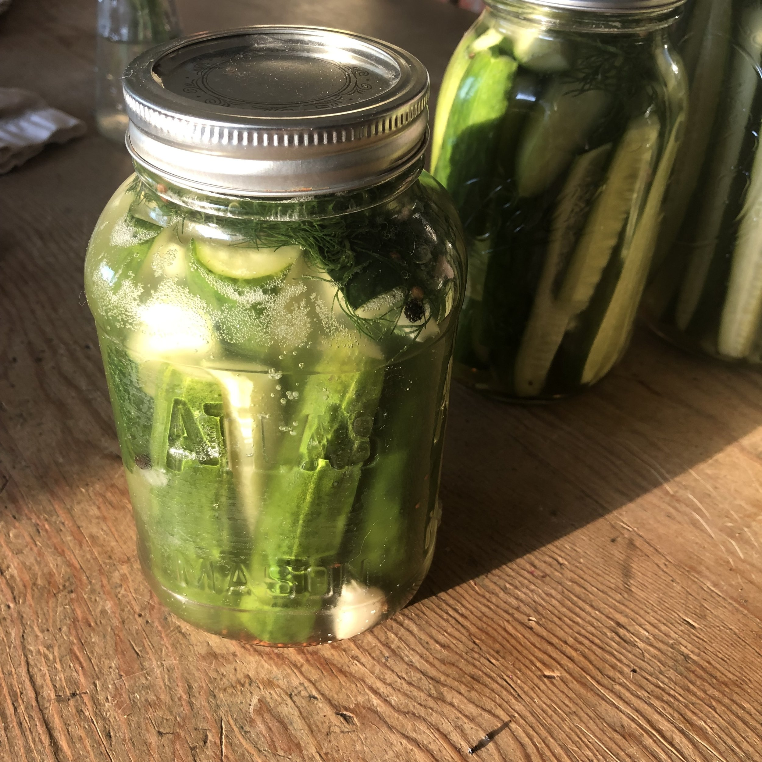 Lacto-Fermenting Cucumbers. See all those bubbles!!