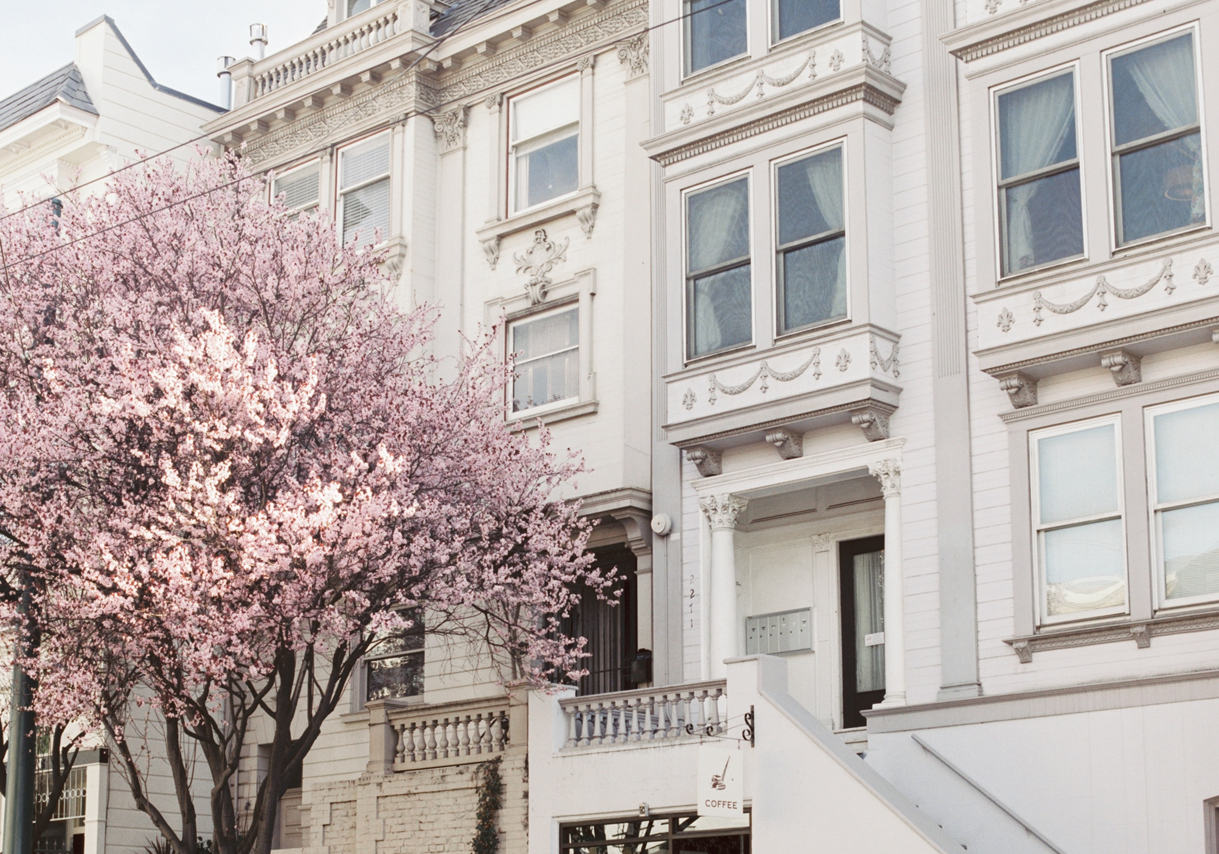 Cherry Blossom at Wrecking Ball Coffee