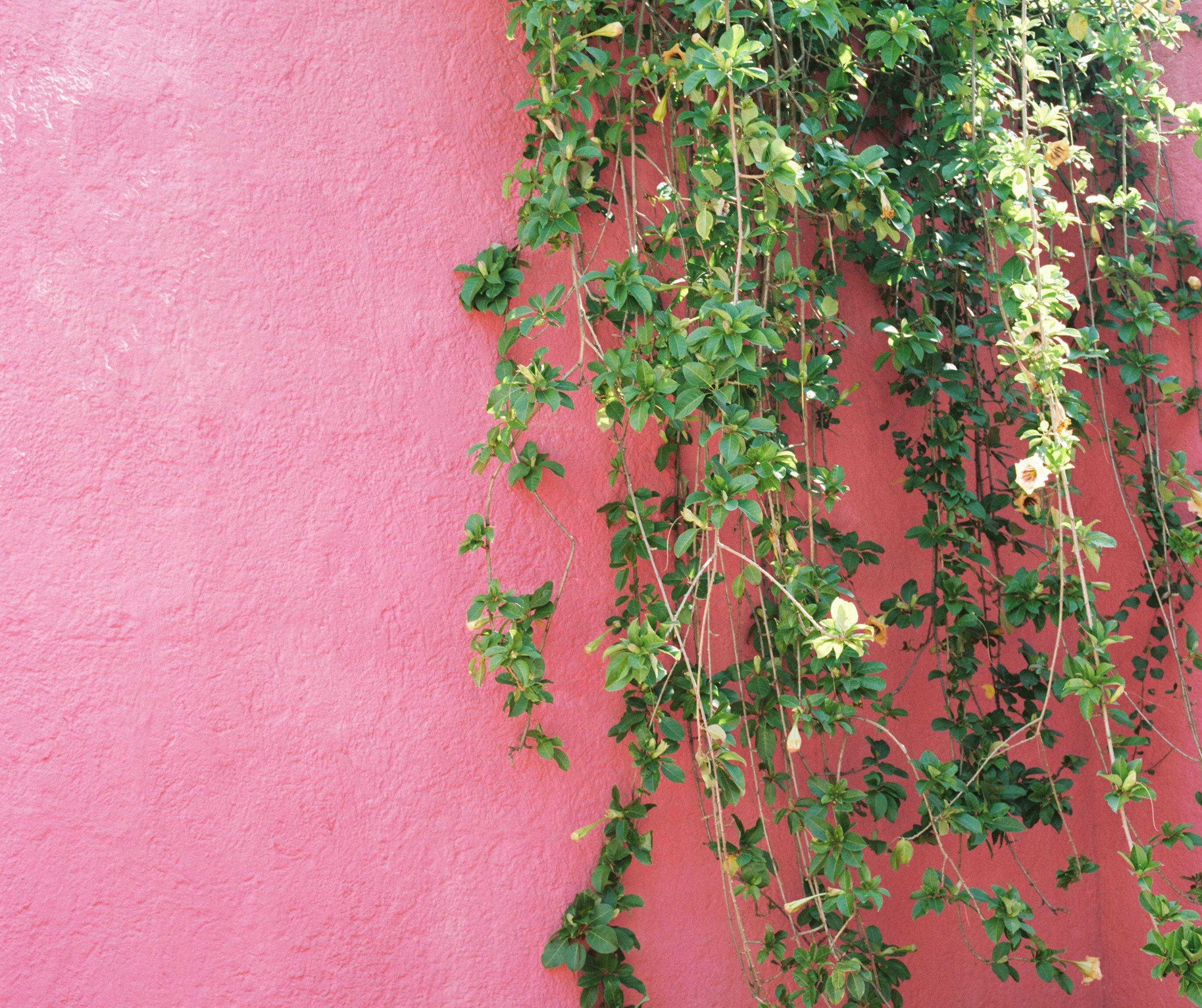 Casa Luis Barragan Pink Wall Plants