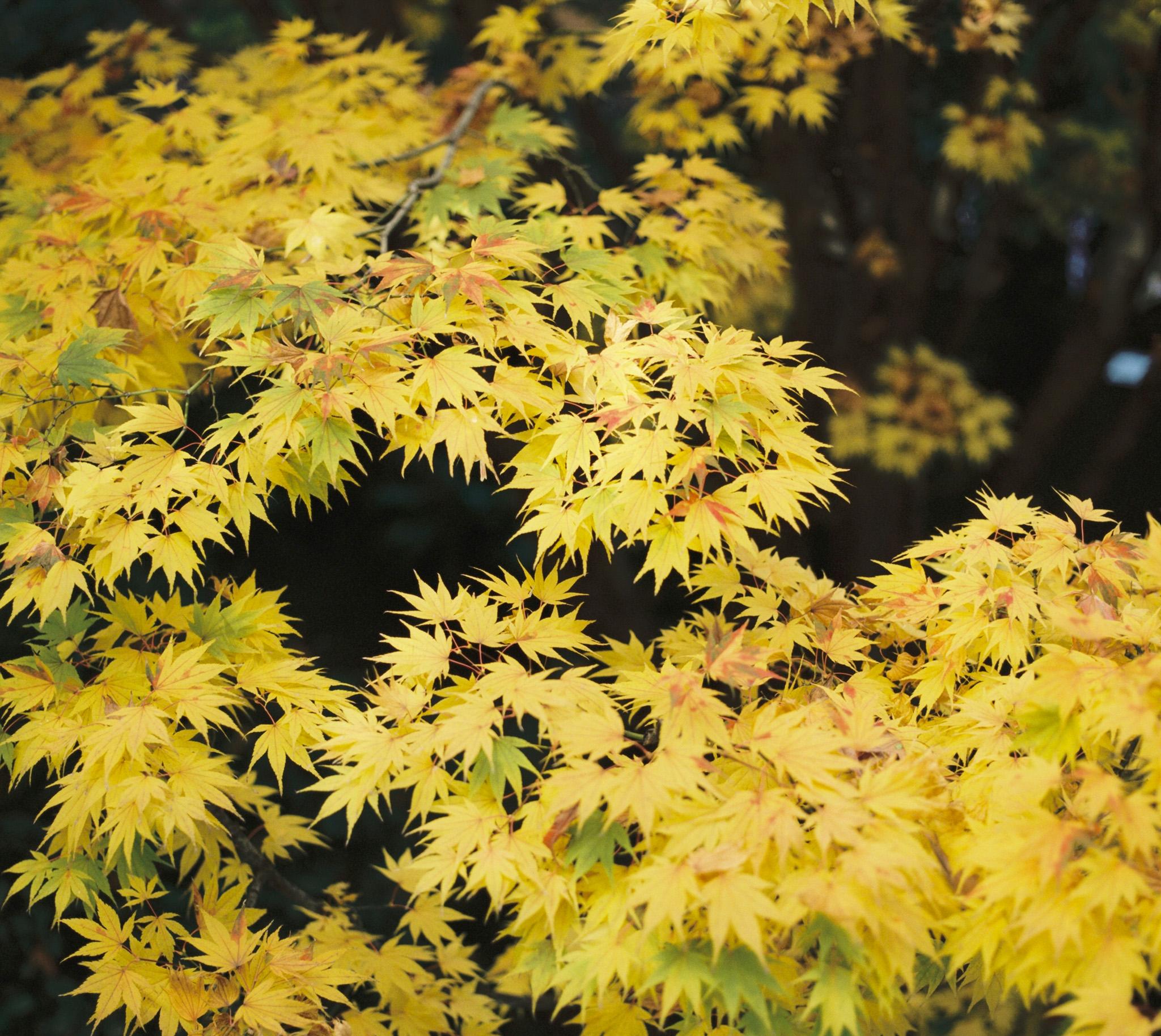 Fall Foilage Omotesando Tokyo