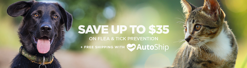 Visit our  online pharmacy  for products to prevent and treat ticks on your pets.