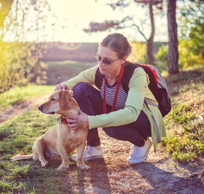 stock-photo-help-clean-ticks-from-dogs-620715182.jpg