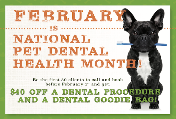 BOT February 2018 Dental Month.png