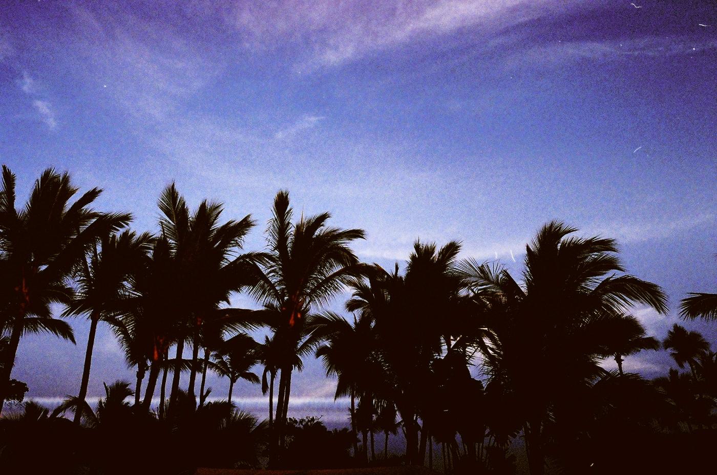 silhouette_treesedit.jpg