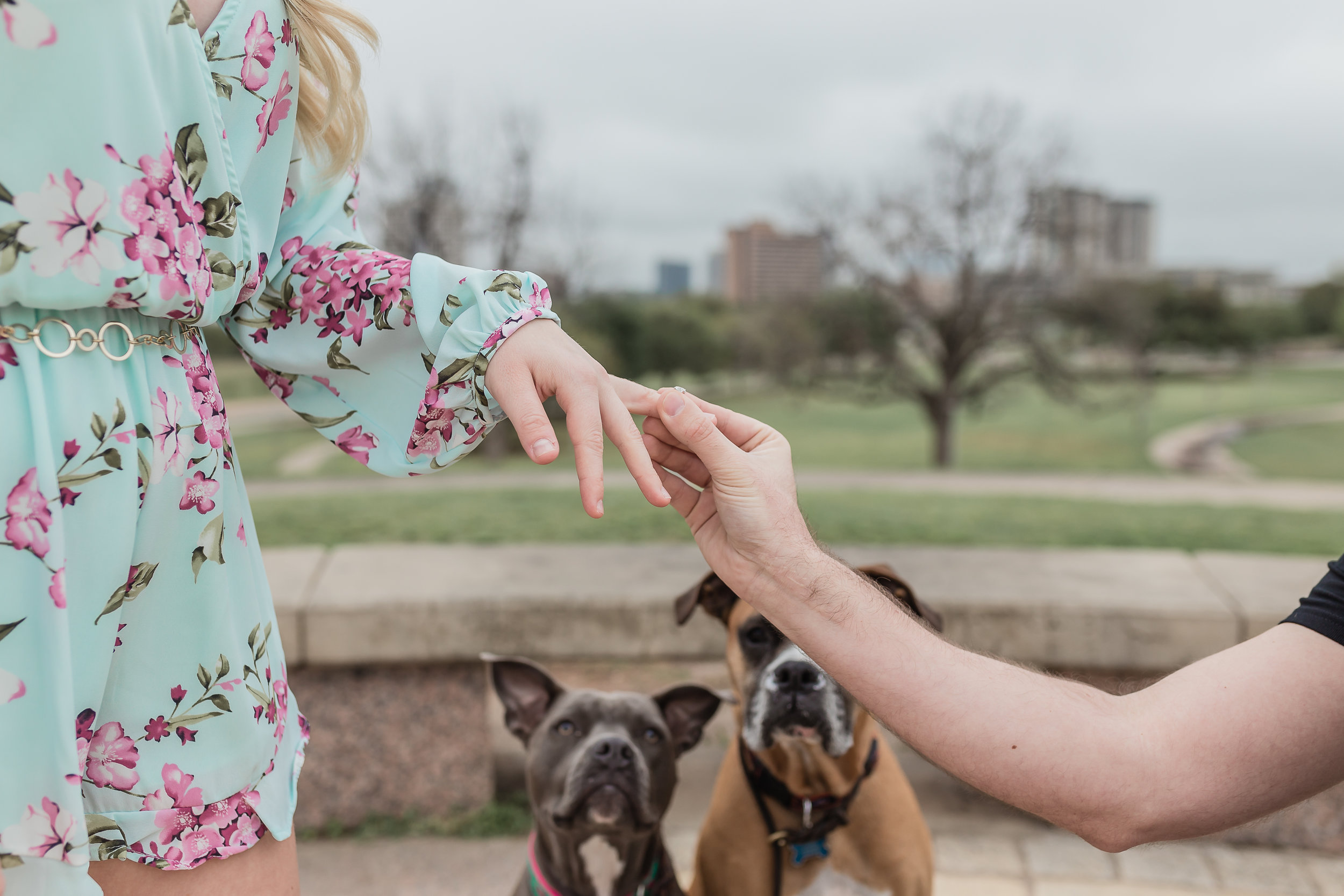 Proposal with dogs photo
