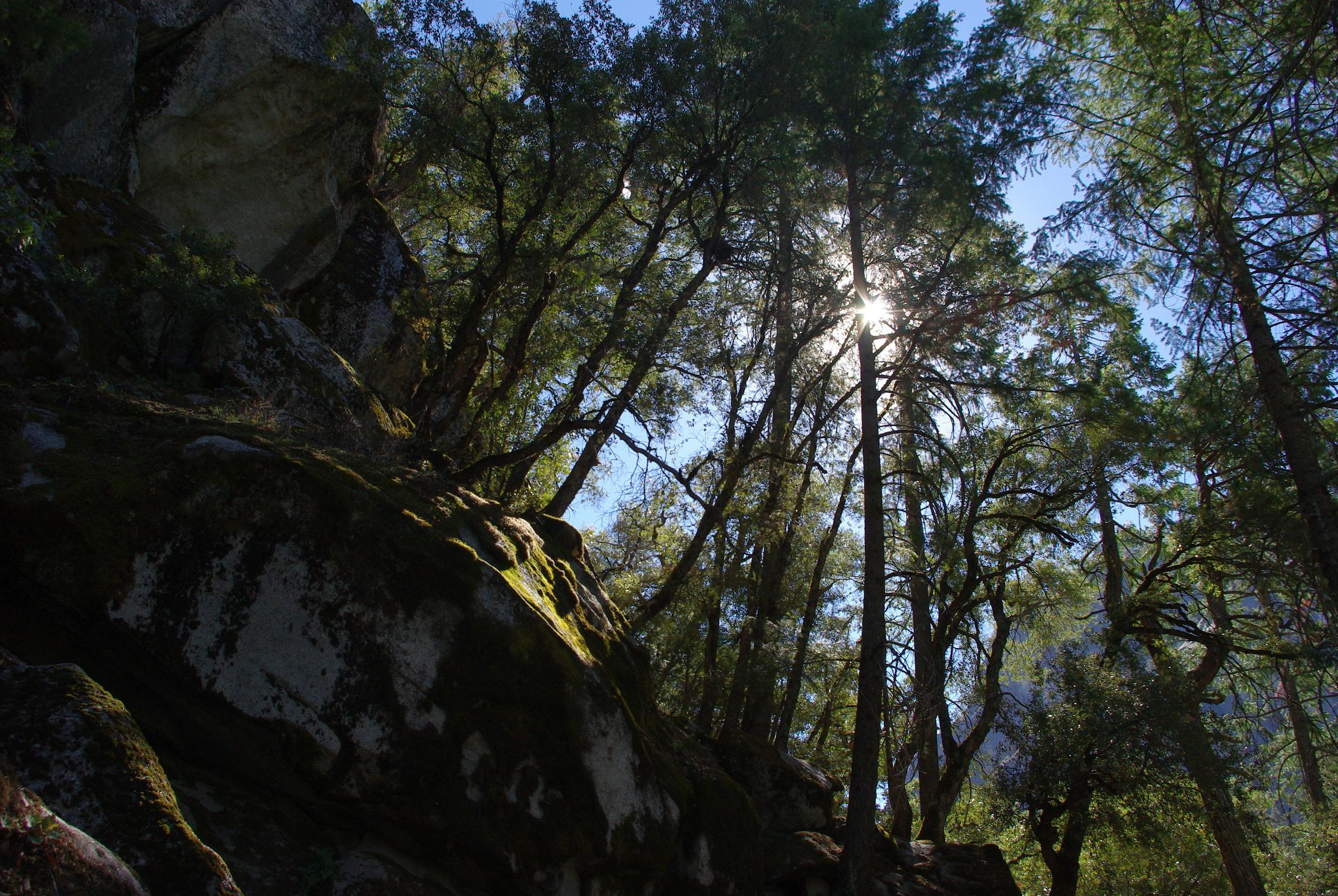 Yosemite National Park light through trees Jen's Bucket List