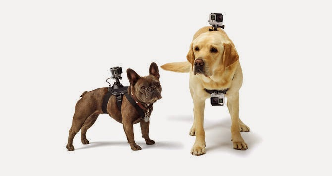 "9.      GoPro Fetch mount      (59.99) ""Capture the world from your dog's point of view"" If you have a GoPro and a dog, then what are you waiting for?"