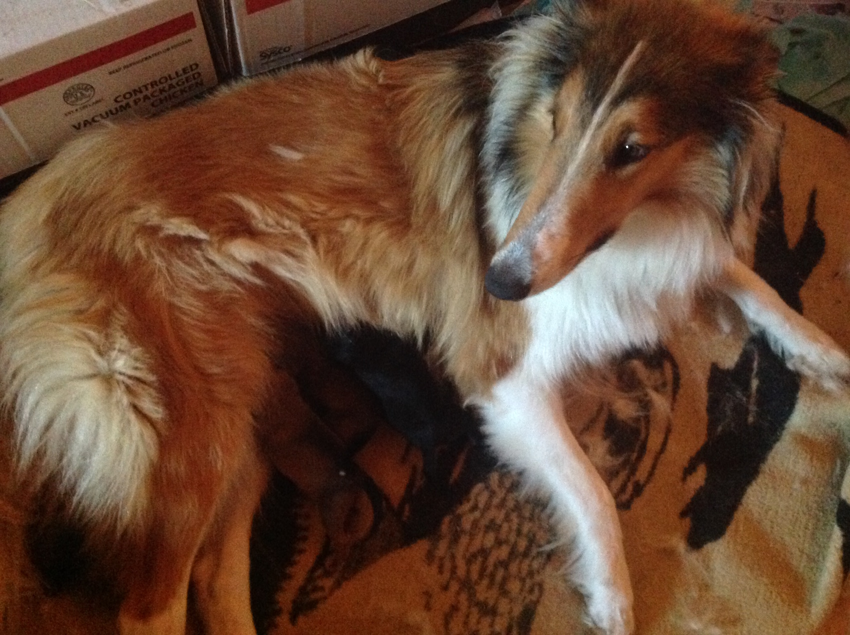 Here's our new momma, Scout, and the puppies!