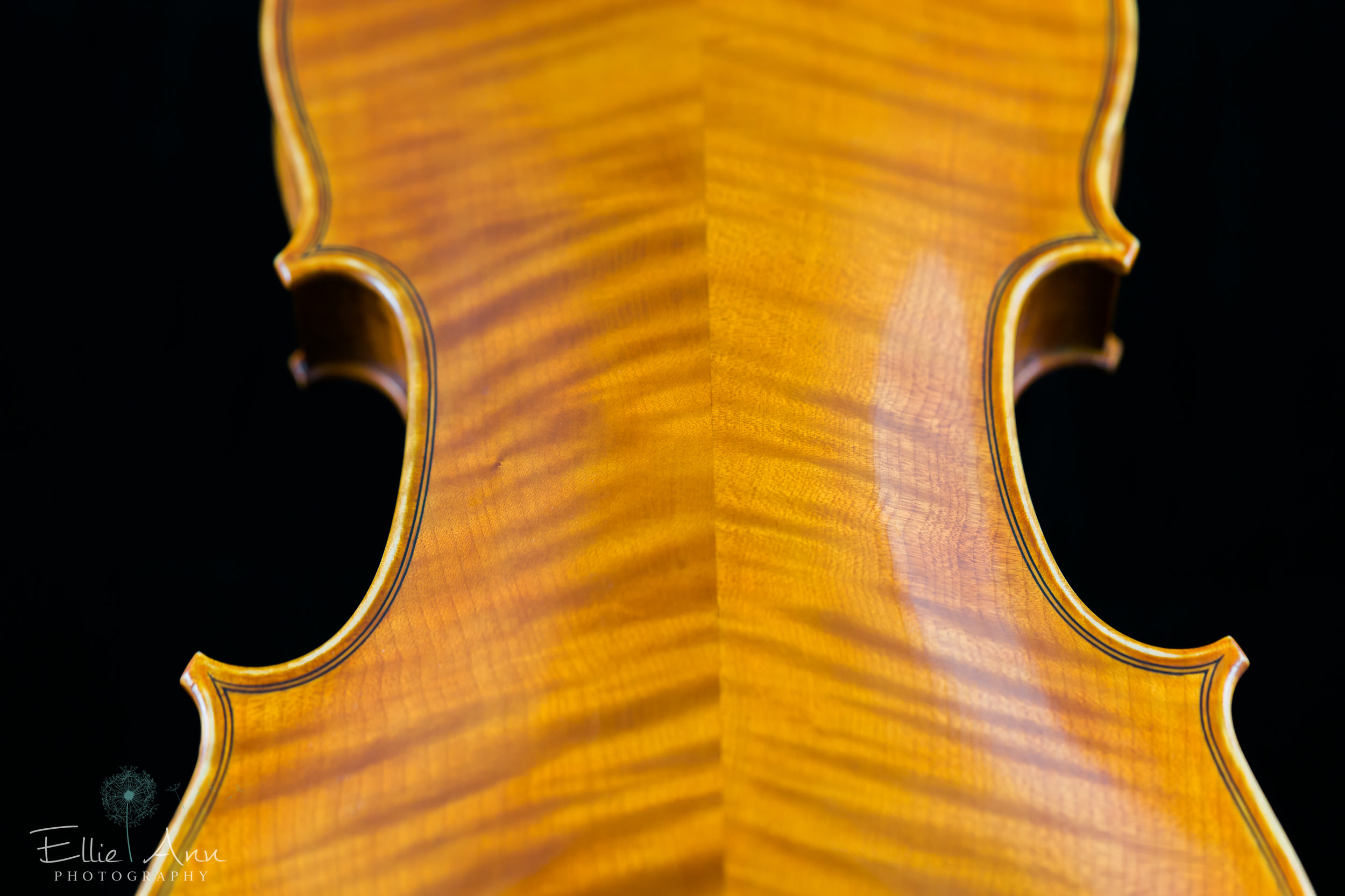 Violin-20.jpg
