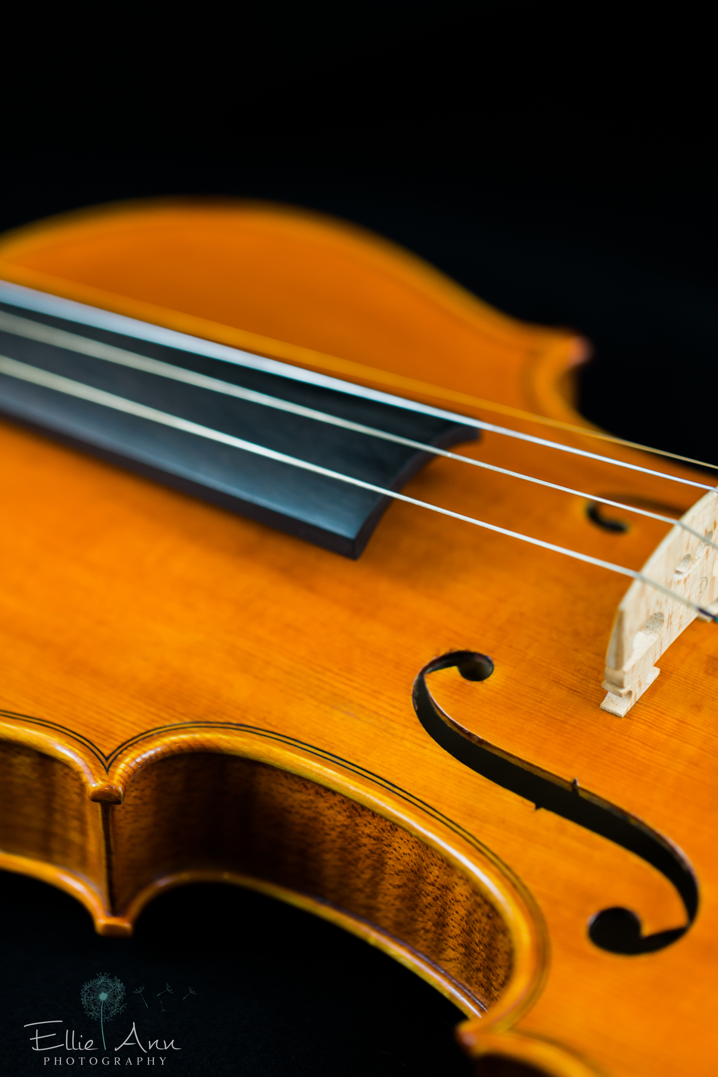 Violin-15.jpg