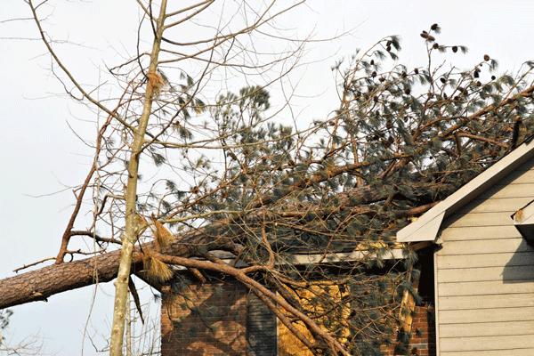 storm tree damage