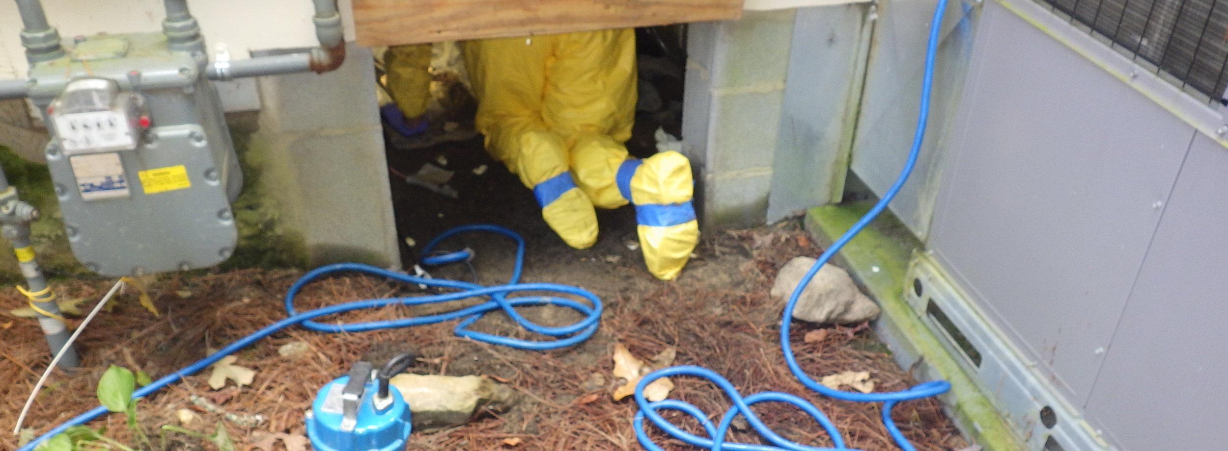 sewage-backup-cleanup
