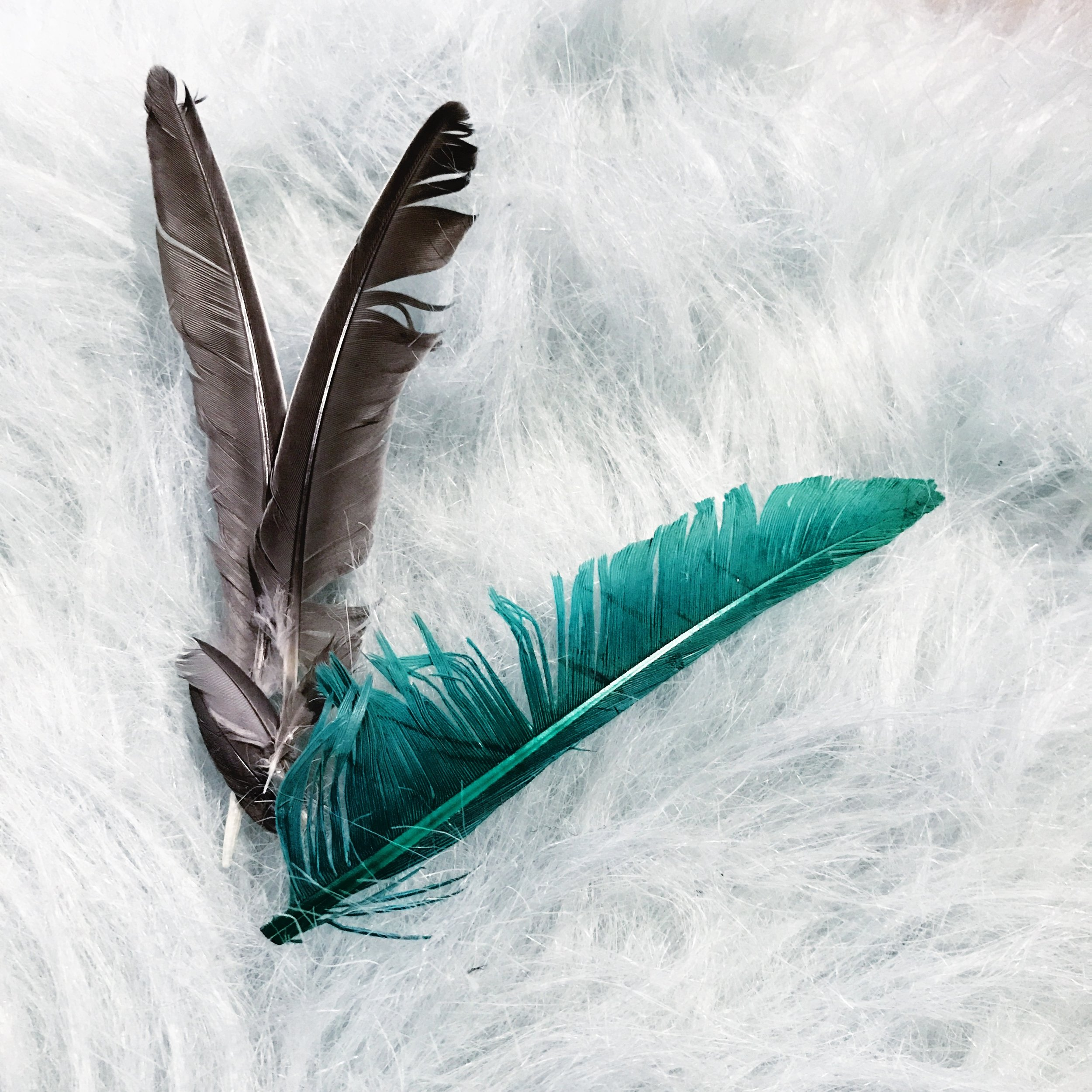 Feathers messages sent from Angels, read more at www.theonyxfeather.com