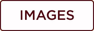 dogwoof documentary button website.jpg
