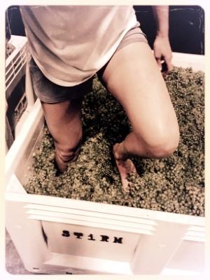 Extracting terpenes...