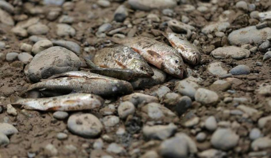 "Torres, A. (febrero 16 2019). La FM. ""Crisis de Hidroituango ha dejado 12.300 peces muertos"". Recuperado de  https://www.lafm.com.co/medio-ambiente/crisis-de-hidroituango-ha-dejado-12300-peces-muertos"