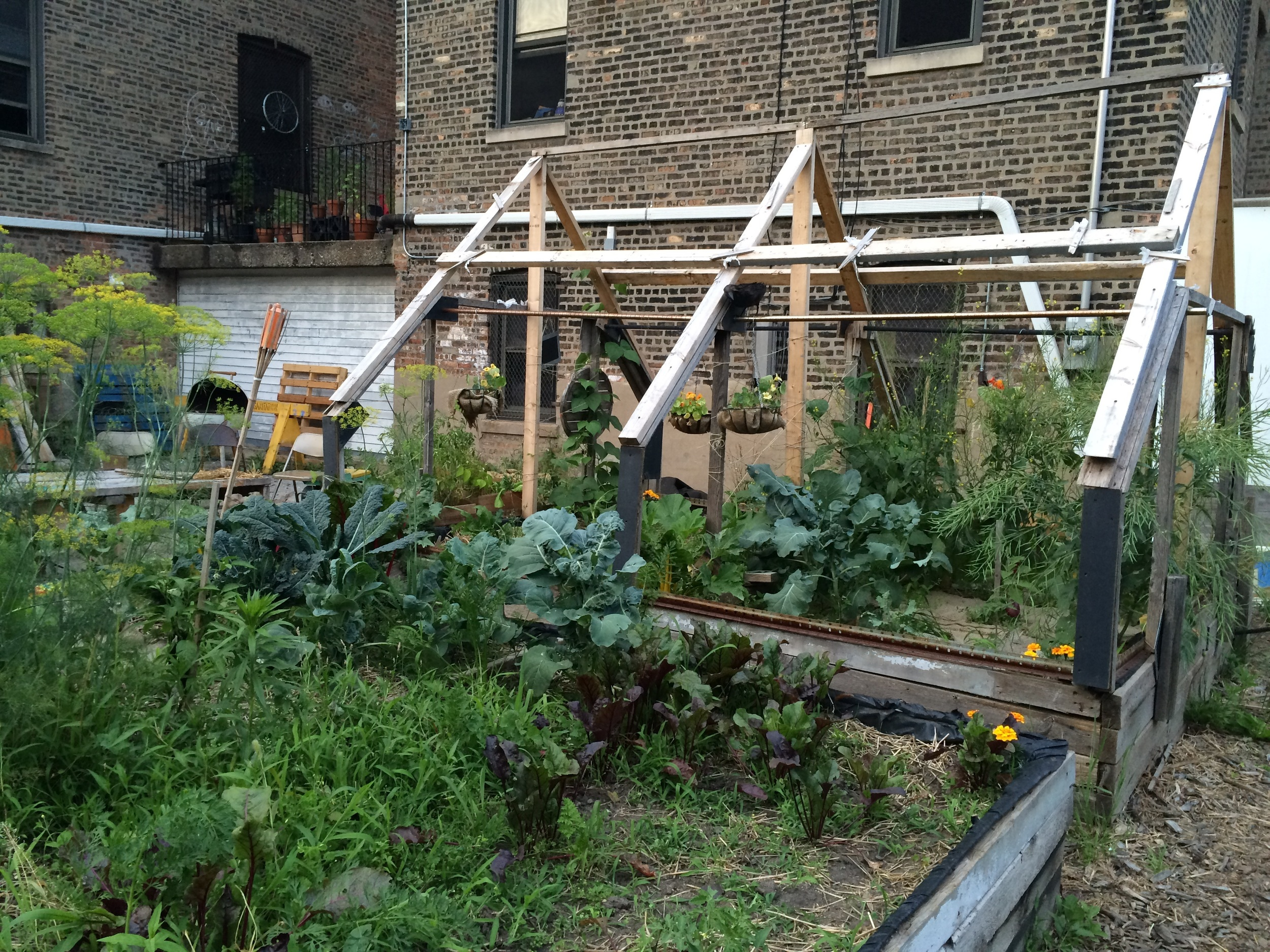 Organic, raised bed gardens bring Bridgeport community members together to raise healthy food for their pantry.